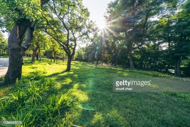lawn and trees in the park - hausgarten stock-fotos und bilder