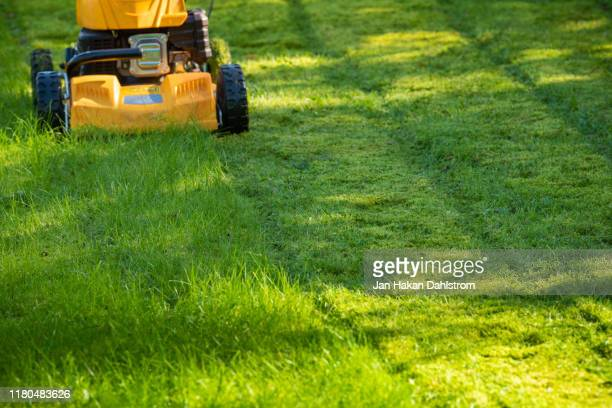 lawn mower on grass in garden - cutting stock pictures, royalty-free photos & images