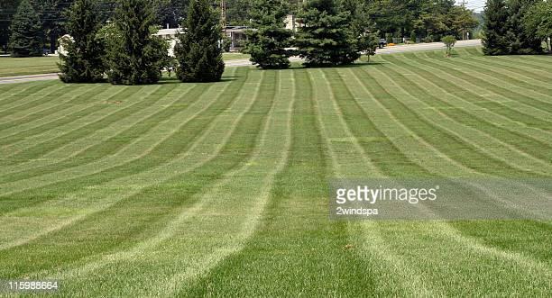 Rasen-Muster