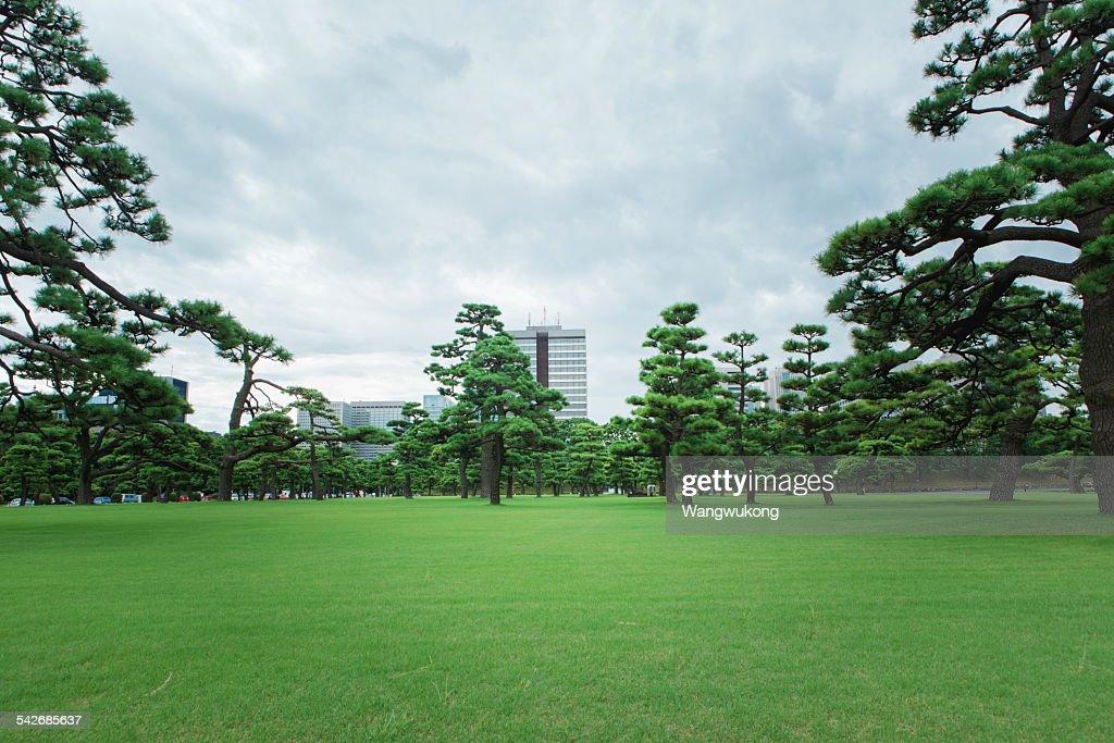 lawn : Foto de stock