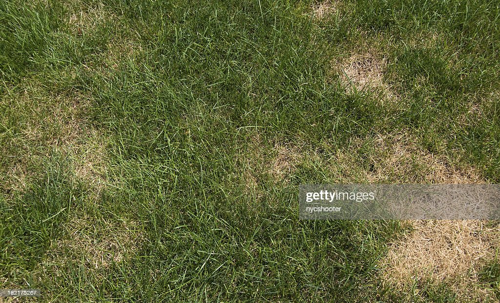 Lawn problems : Stock Photo