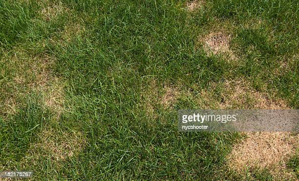 lawn problems - brown stock pictures, royalty-free photos & images