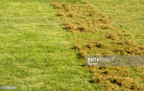 lawn scarification and aeration treatment. lawn after scarification. gardening - ivraie photos et images de collection
