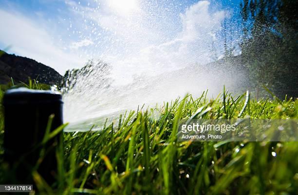 Lawn Sprinkler Spraying Water in Backyard