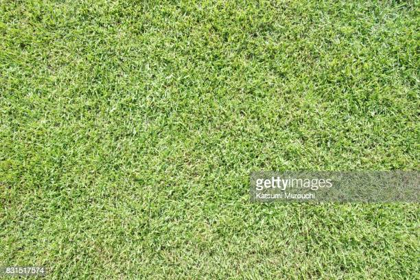 Lawn texture background