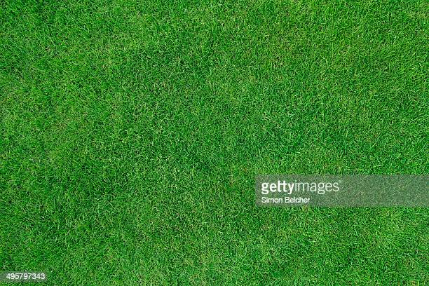 Lawn, United Kingdom