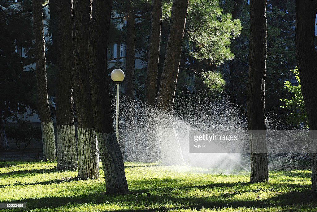 Lawn watering sprinkler : Stock Photo