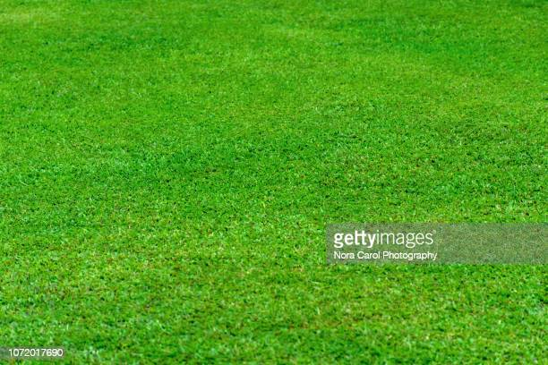 lawn-grass green background - cricket field stock pictures, royalty-free photos & images