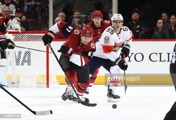 Lawson Crouse of the Arizona Coyotes skates for a loose puck against Noel Acciari of the Florida Panthers at Gila River Arena on February 25 2020 in...