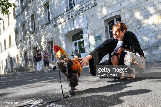 A lawyer pets a rooster in front of the high court in Rochefort western France on July 4 2019 where the justice is set to rule on whether a lively...