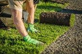 Lay Natural Grass Turfs