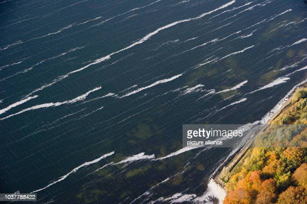 A layer of BlueGreen Algae off the coast of Ruegen Island near LauterbachGermany 15 October 2013 Blooms of bluegreen algae occur mostly during the...