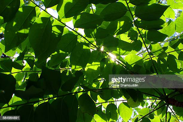layer of leaves - omar shamsuddin stock pictures, royalty-free photos & images