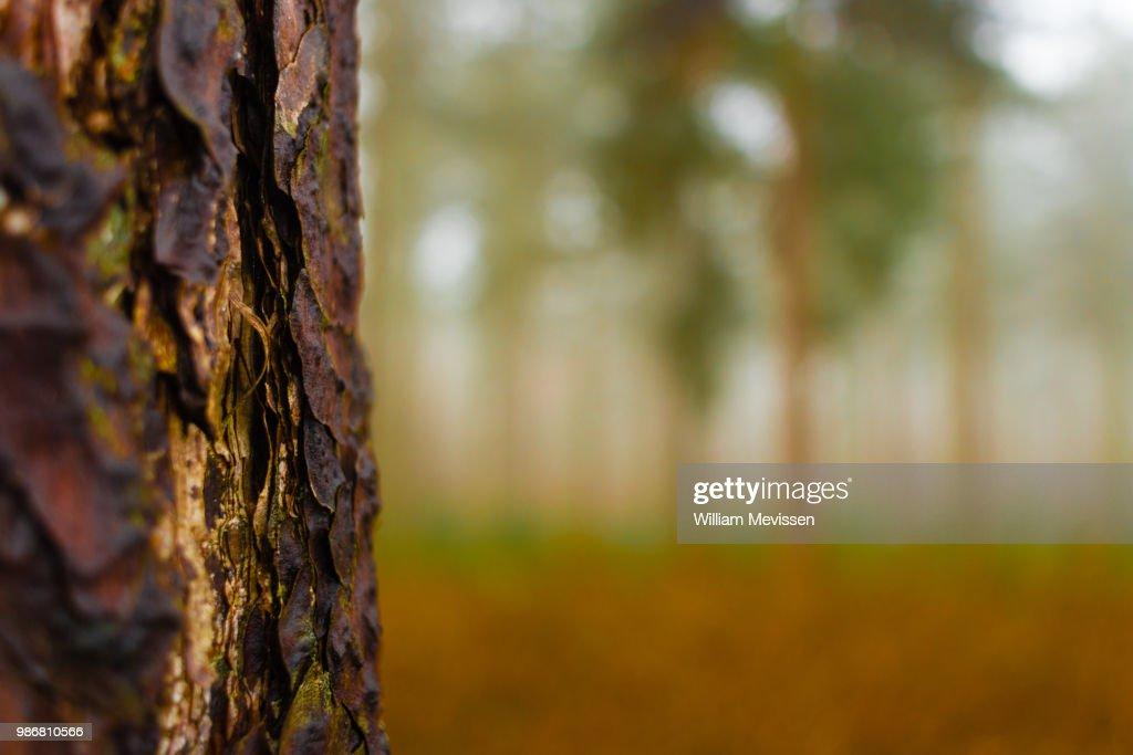 Layers of Bark : Stockfoto