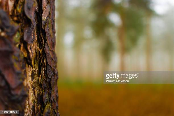 layers of bark - william mevissen stockfoto's en -beelden