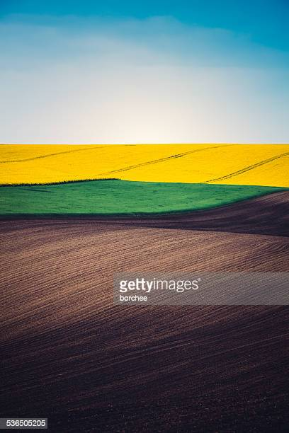 Layers Of Colorful Field