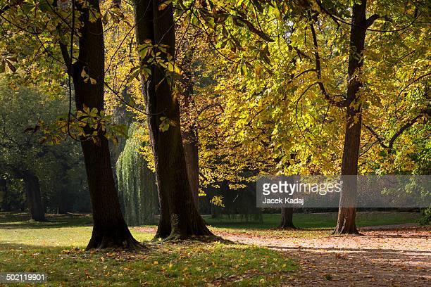 lazienki krolewskie park in warsaw - マゾフシェ県 ストックフォトと画像