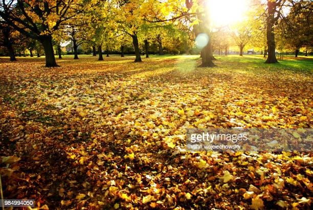 lazy and sunny day at hyde park - vahn stock pictures, royalty-free photos & images