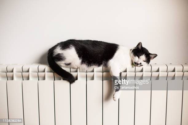 lazy black and white cat sleeping on a radiator