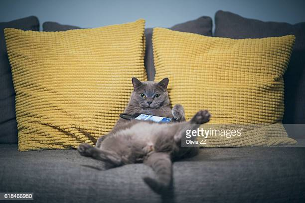 lazy cat is leaning on sofa with cellphone - laziness stock pictures, royalty-free photos & images