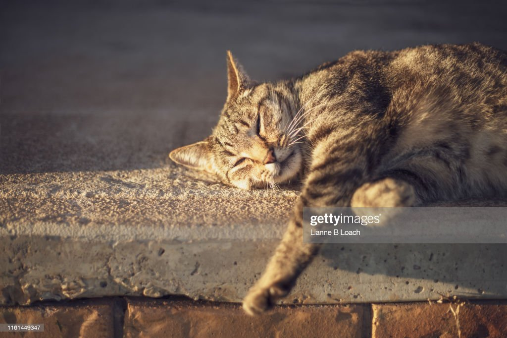 Lazy Day : Stock Photo