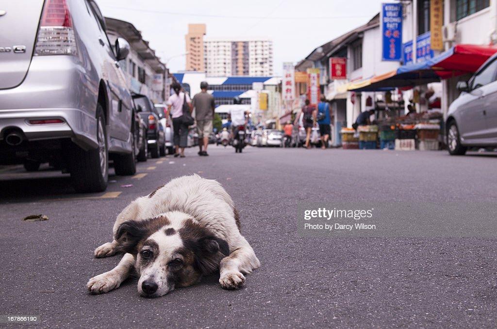 Lazy dog lying on a street : Stock Photo