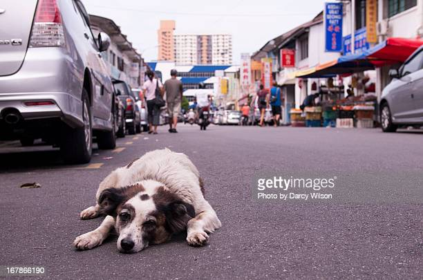 lazy dog lying on a street - stray animal stock pictures, royalty-free photos & images