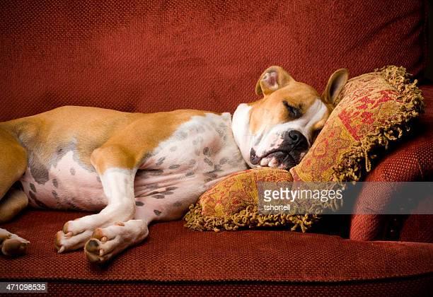 Lazy Dog schlafen in einem Stuhl