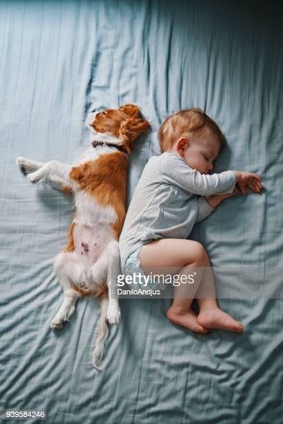 lazy mornings at home - animals and people stock pictures, royalty-free photos & images