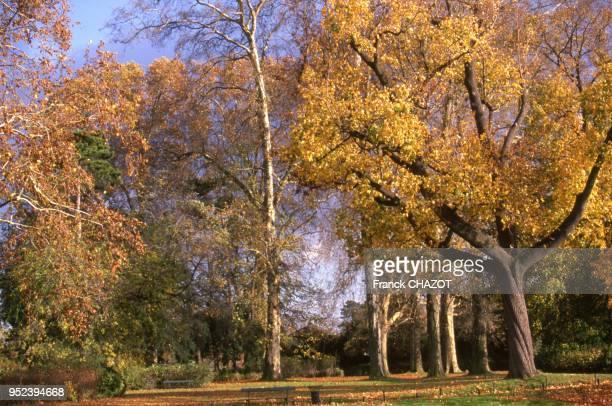 Le Bois de Vincennes en automne, à Paris, France.