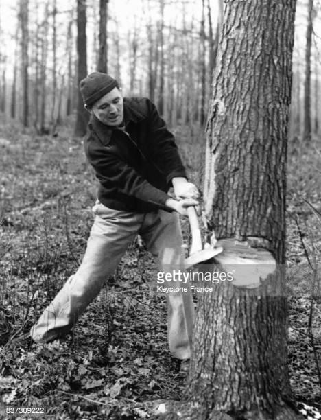 Le boxeur américain Jimmy Braddock essaie d'abattre un arbre à coups de hache lors d'un entraînement dans les bois le 1er février 1937 à Guttenberg NJ