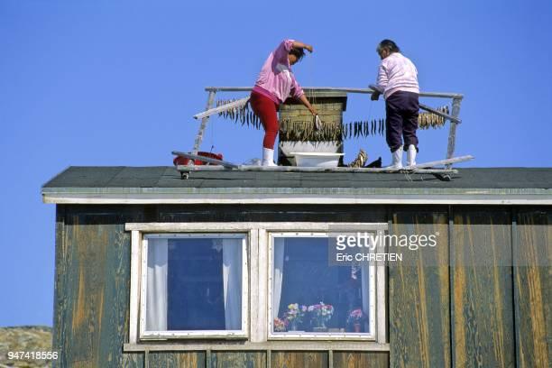 Le capelan ce poisson localement appele ammassat a donne son nom a la region d'Ammassalik Village de Tiniteqilaaq Region d'Ammassalik