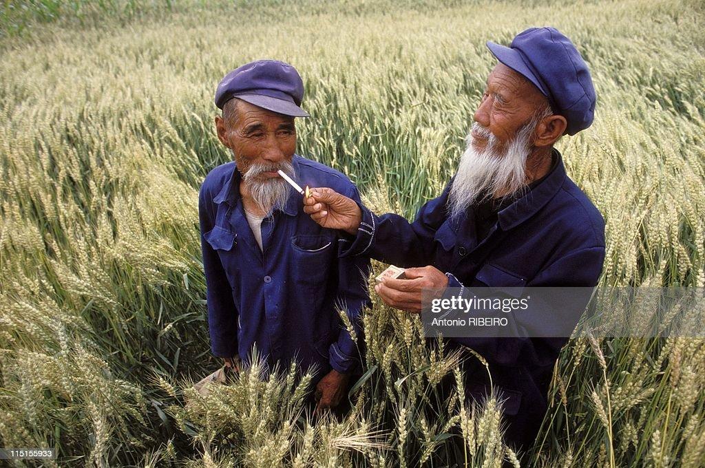 'Le Defi de la Muraille de Chine' race in China in August, 1993 - Province of Gansu. Old peasants in a wheat field.