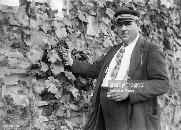 Le gardien de la treille examine une belle grappe de raisin avant sa mise aux enchères à Fontainebleau France le 30 août 1933