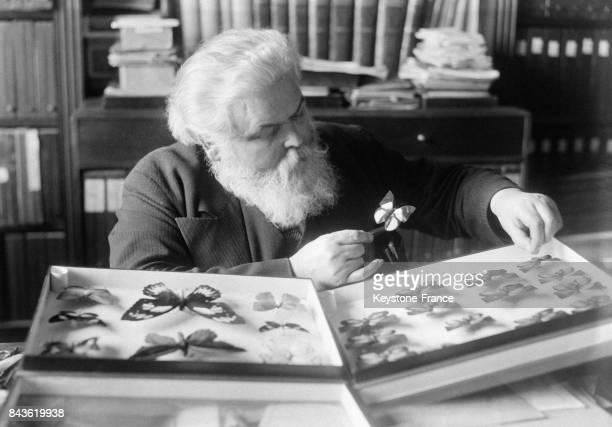 Le naturaliste Eugène Le Moult rangeant dans sa boite un papillon qu'il vient d'étudier et qui rejoint sa collection en France circa 1930