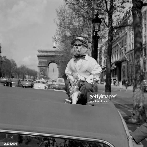 Le petit singe, vendeur de muguet sur les Champs-Elysées, à Paris, France le 1er mai 1964.