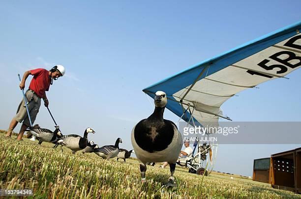 Le pilote d'ULM Christian Moullec est photographié après un vol avec ses oiseaux Bernaches Nonnettes le 25 juin près de Reims lors d'un meeting...