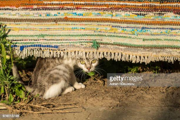 Media Gettyimages Com Photos Le Tapis Roumaine