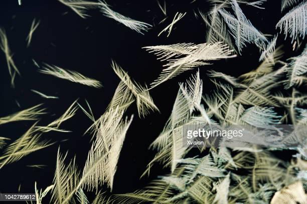 lead chloride precipitation forms feather shape crystal - 亜鉛 ストックフォトと画像