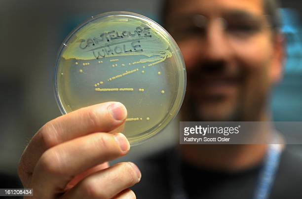 Lead Food Lab Scientist Skip Gossack holds up a petri dish with the visible Listeria colonies from the Holly cantaloupe The Colorado Departement of...