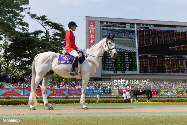 Lead horse at the paddock during Tokyo Yushun at Tokyo Racecourse on May 26 2013 in Tokyo Japan Tokyo Yushun Japanese Derby is the second leg of...