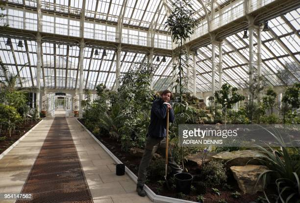 Lead Horticulturist Scott Taylor leans on his spade before he plants a Solanum laciniatu more commonly known as the kangaroo apple the final plant...