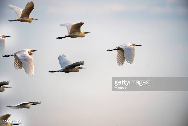 leadership concepts - bird stock photos and pictures