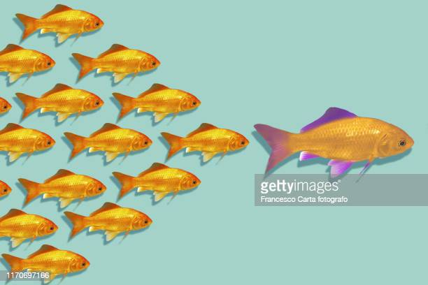leadership - moving after stock pictures, royalty-free photos & images
