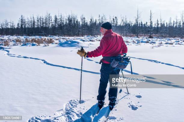 leading the way on a bushwhack ski. - murray mccomb stock pictures, royalty-free photos & images