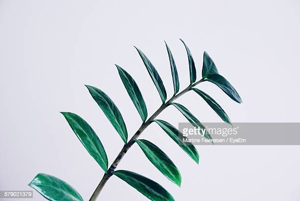 Leaf Against White Background