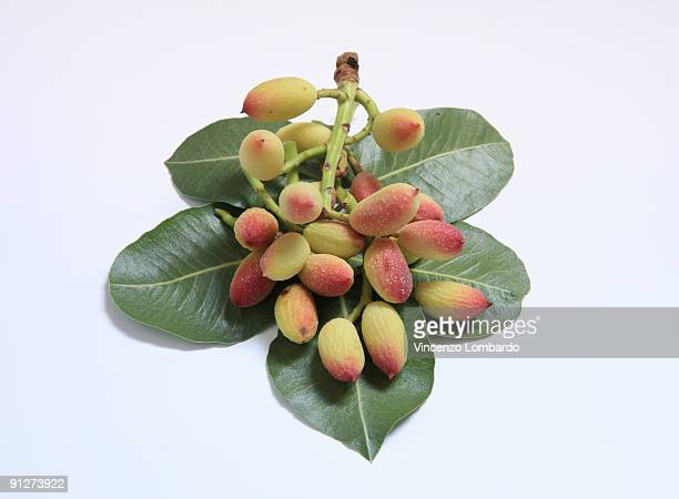 leaf and fruit of pistachio fresh - pistachio tree stock photos and pictures