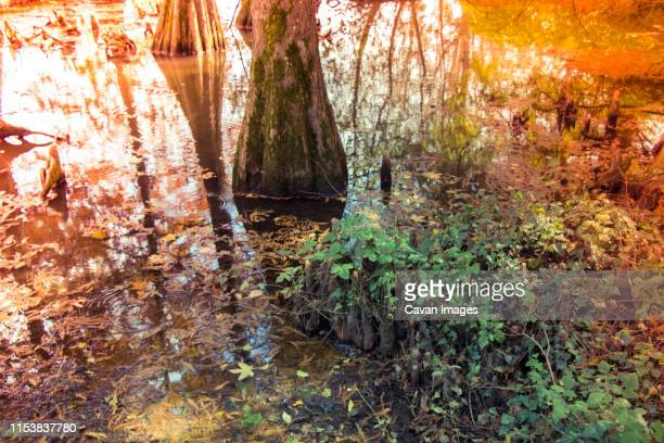 leaf and water as and background texture - as stock pictures, royalty-free photos & images