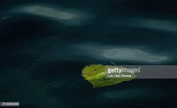 Leaf at sea