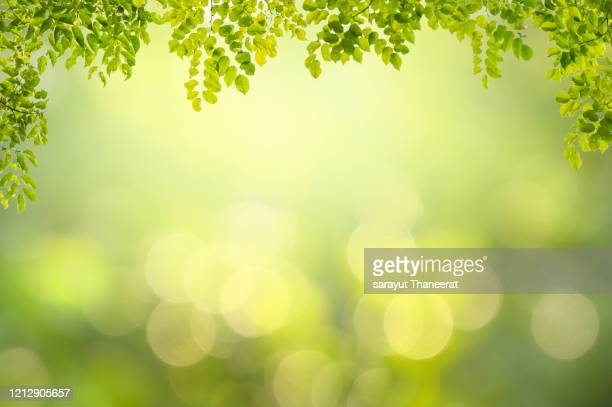 leaf background bokeh blur green background - bright beautiful flowers stock pictures, royalty-free photos & images